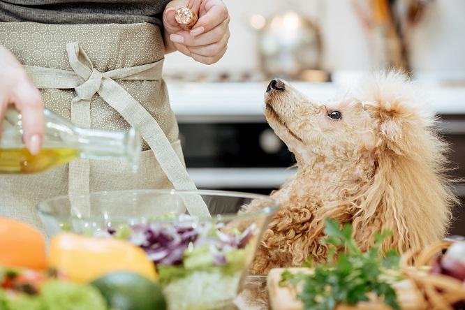 オリーブオイルと犬
