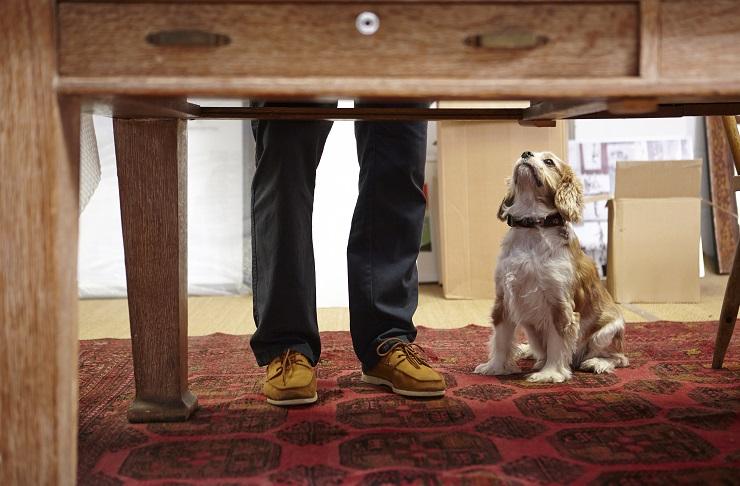 机の下で見上げる犬