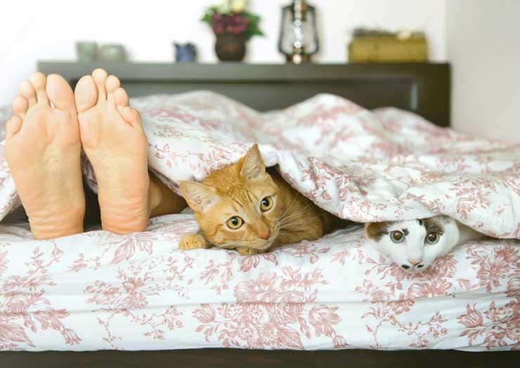 猫の多頭飼育をイメージする画像