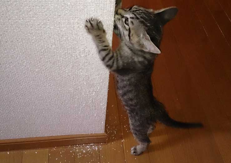 一人暮らしで猫を飼うときに困ることをイメージする画像