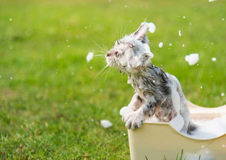 子猫のお風呂の入れ方イメージ画像