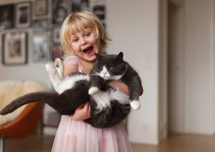 猫のシニアのイメージ