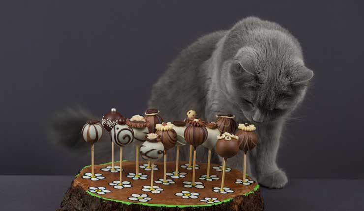 チョコレートを嗅ぐ猫