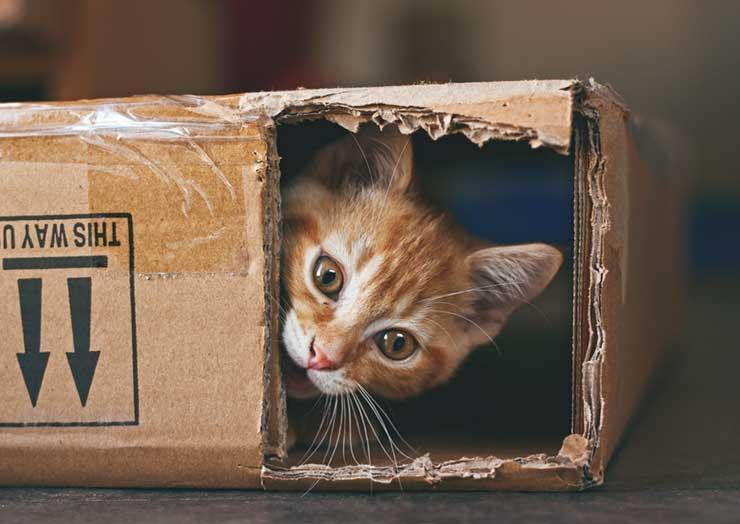 猫の費用について注意することをイメージする画像