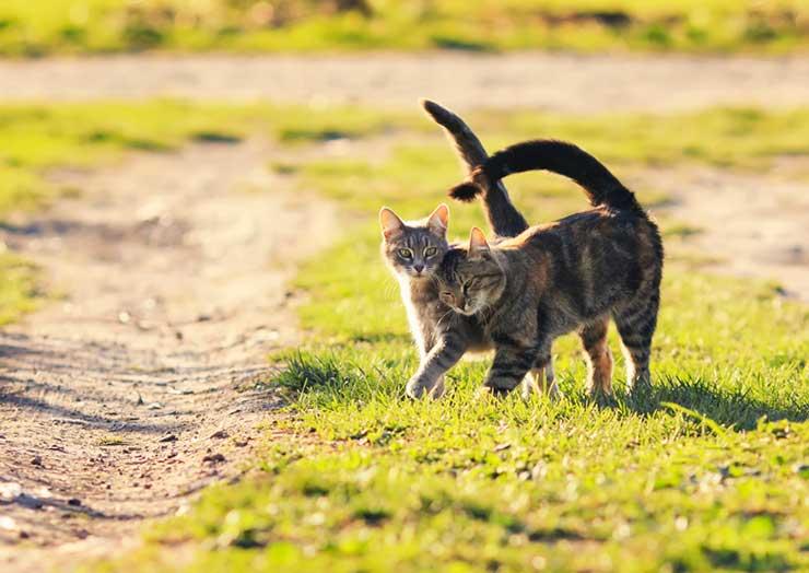 猫の発情期をイメージする画像