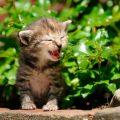 植え込みの中で鳴く子猫