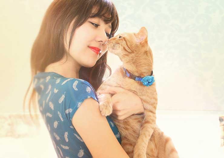 猫の鳴き声をしつけで予防するイメージ画像