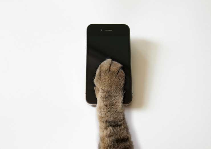 猫の鳴き声アプリの使用イメージ