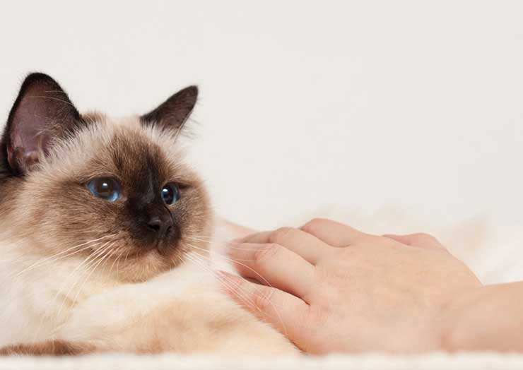 猫への効果的なしつけ法をイメージさせる画像