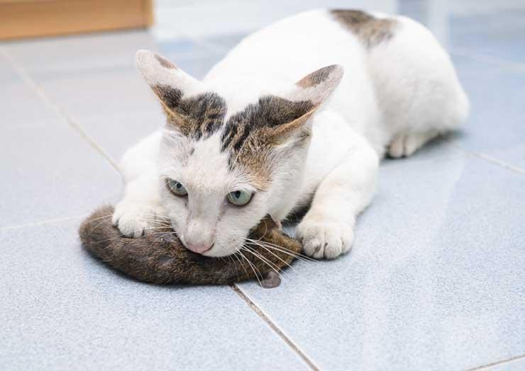 猫の噛む力をイメージさせる画像