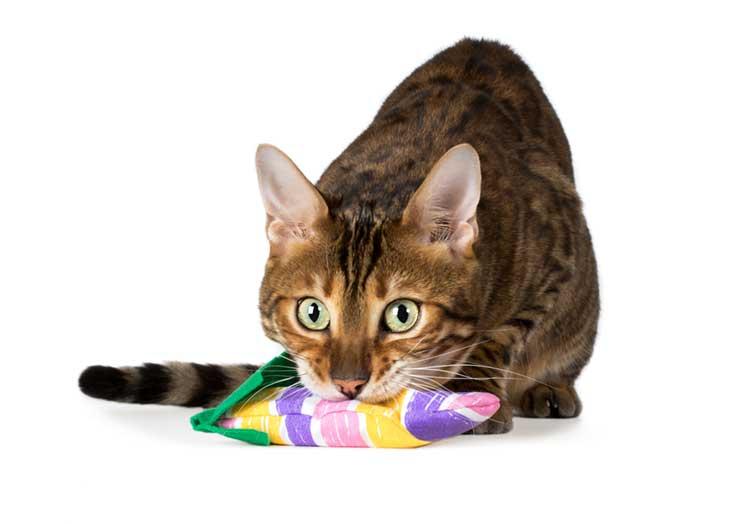 猫に人気の噛むためのおもちゃのイメージ画像