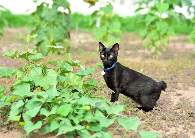 しっぽが短い猫の写真