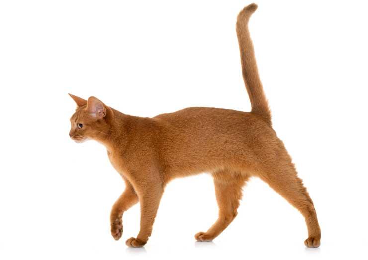 しっぽが長い猫の写真