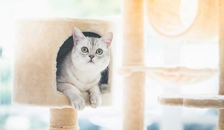 キャットタワーから顔を出す猫