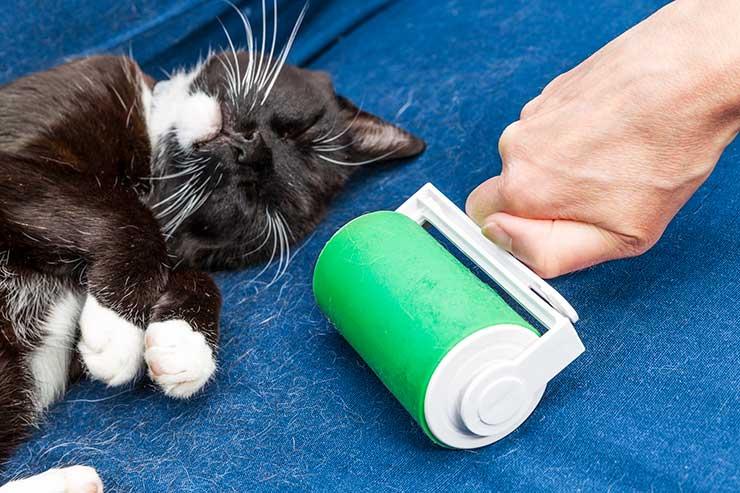 猫を飼って困ったことをイメージする画像