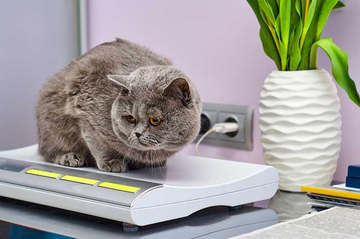 猫の体重の測り方をイメ―ジさせる画像