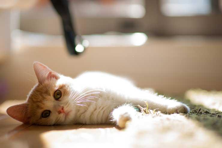 猫とヨーグルトのイメージ画像