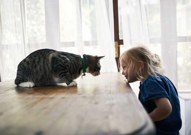 猫が下痢になった場合の対策のイメージ画像