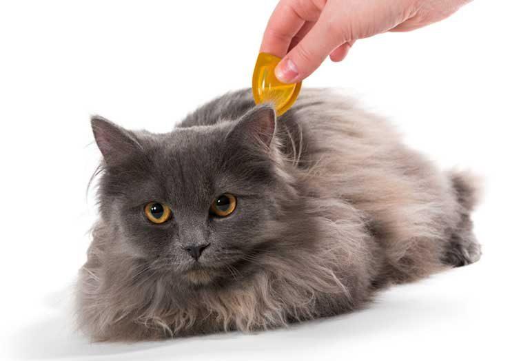 猫にダニを寄生させないようにするにはのイメージ画像