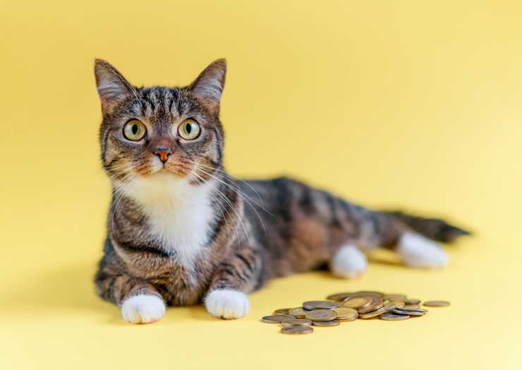 横たわった猫のそばにコインが並べられている画像