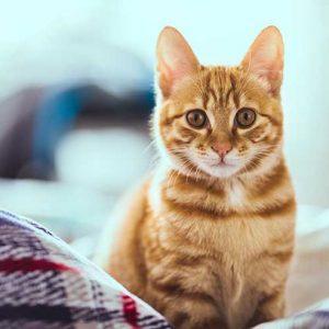 じっと見つめる猫の画像