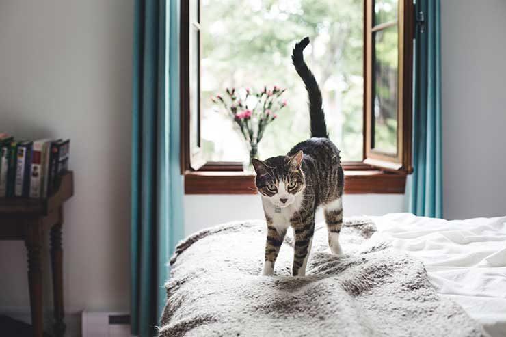 猫のしっぽが垂直に立っている状態の猫