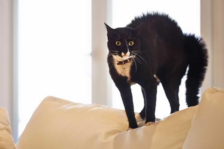 猫の仕草から気持ちを理解するためのイメージ画像