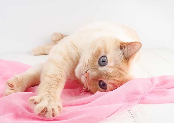 猫がふみふみする様子をイメージさせる画像