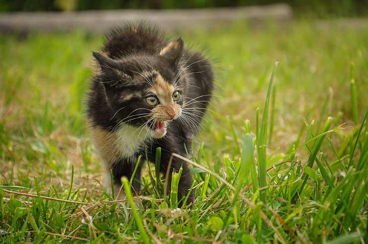 猫の去勢のメリットをイメージさせる画像