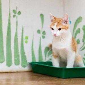 トイレに座る猫の画像