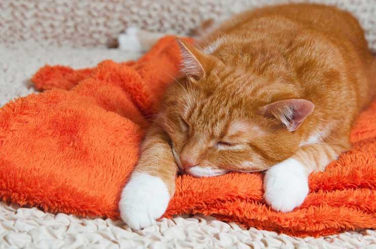 猫の血便で考えられる病気をイメージさせる画像
