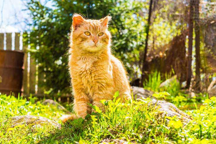 猫の寿命のギネス記録をイメージする画像
