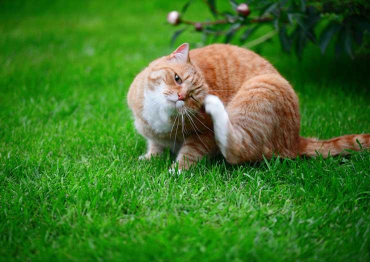 猫の皮膚病の原因をイメージさせる画像