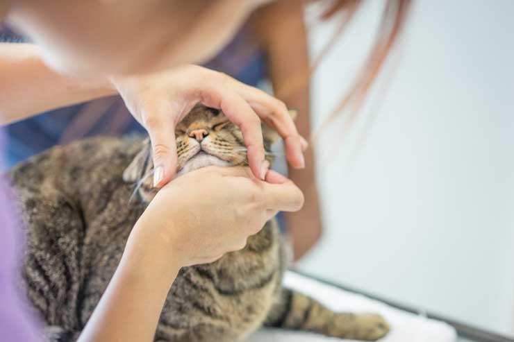 猫の鼻水の原因をイメージする画像