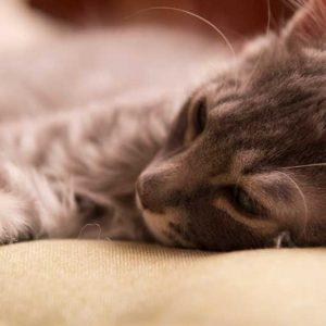 ぐったりを横になる猫