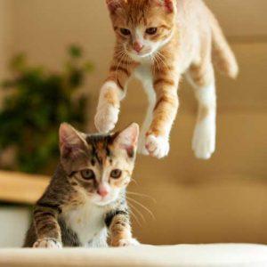 ジャンプしている子猫の画像