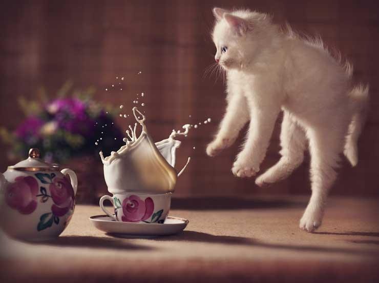 猫が驚いている画像