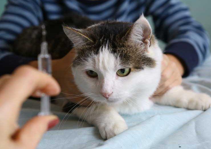 注射をされる猫の画像
