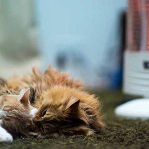 煖房の前で丸くなる二頭の猫