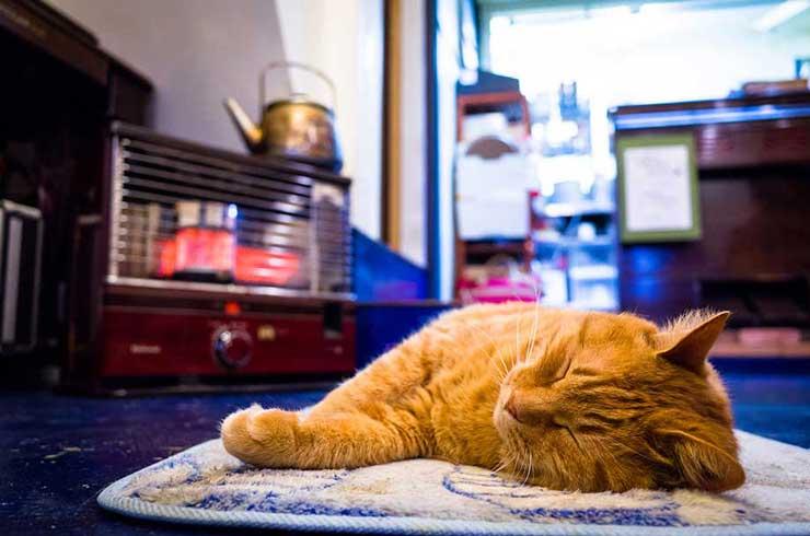 猫がストーブの前で寝そべっている画像