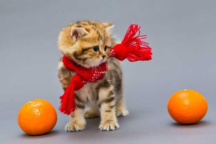 みかんと子猫の画像