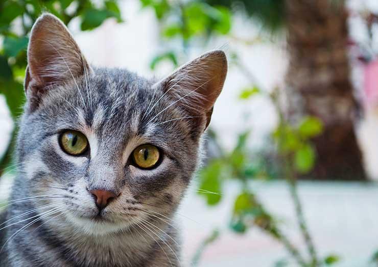 正面をじっと見つめる猫