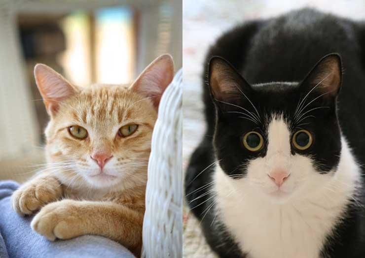 猫の目の瞳孔について
