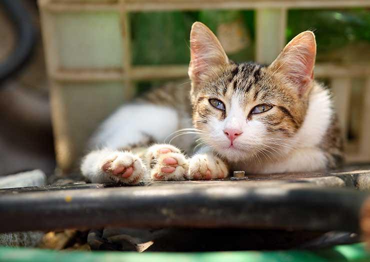 猫の瞬膜に症状が現れたときに考えられる病気のイメージ