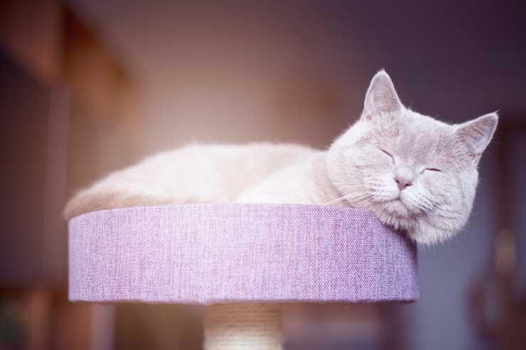 猫白血病ウイルスに感染させないためにはのイメージ写真