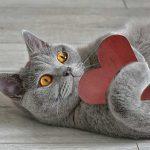 ハート形のおもちゃを抱く猫