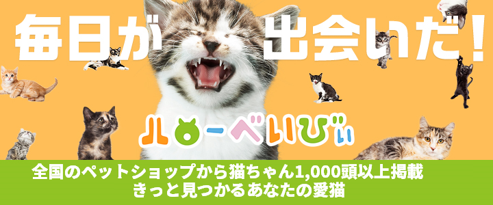 あなたのパートナー猫を探そう。全国のアニコム損保ペット保険取扱ペットショップから探せる