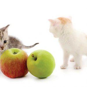 りんごと2頭の子猫の画像