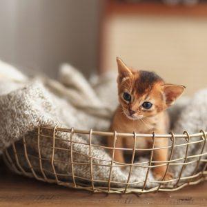 洗濯かごに入った子猫の画像