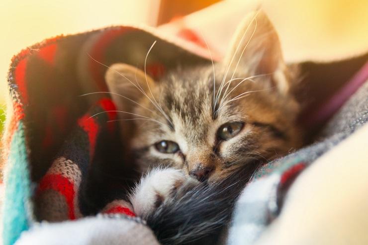 子猫が病気になっているイメージ画像